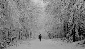 Сиротливая прогулка в лесе зимы стоковое фото rf