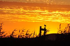 Сиротливая птица на заходе солнца Стоковое Изображение RF