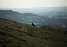 Сиротливая птица на холме стоковое фото rf