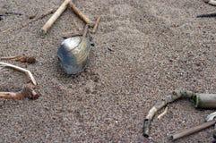 сиротливая раковина Стоковые Фото