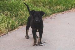 Сиротливая случайная собака щенка с грустными глазами лежит на траве и ждет свой владельца Голодный друг в парке стоковое изображение rf