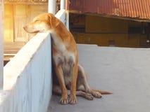 Сиротливая собака на заходе солнца Стоковая Фотография