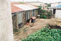 Сиротливая собака на сельском доме стоковое изображение