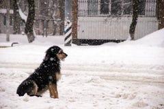 Сиротливая собака doggy сидит на улице во время сильного снегопада и ожиданий для ее мастера стоковая фотография rf
