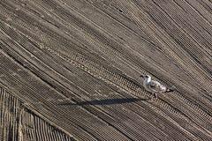 Сиротливая чайка дальше очистила песком трактора на среднеземноморском Стоковое Фото