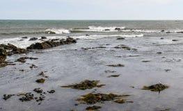 Сиротливая чайка моря на побережье Род-Айленда Стоковое Изображение RF