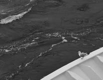 Сиротливая чайка сидя на доске корабля стоковое фото