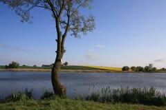 Сиротливое дерево вербы озером стоковое фото rf