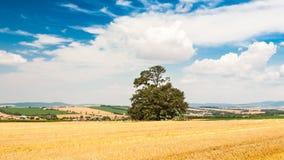 Сиротливое дерево в поле под голубым небом с облаками стоковое фото rf