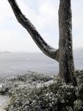 Сиротливое дерево готовя пляж Ландшафт взморья зимы Snowy стоковые изображения rf
