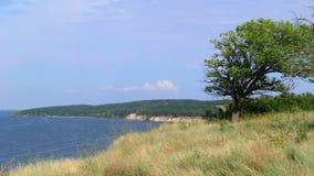 Сиротливое дерево на береге скалы стоковое фото rf