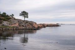 Сиротливое дерево на вечере seashore Стоковое Изображение RF