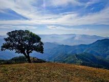 Сиротливое дерево на горном пике стоковые фотографии rf