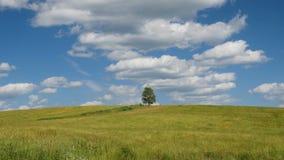 Сиротливое дерево на зеленом поле против предпосылки голубого неба сток-видео