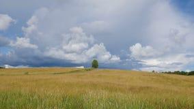Сиротливое дерево на зеленом поле против предпосылки голубого неба видеоматериал
