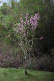 Сиротливое дерево, славный цвет стоковое изображение