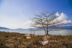 Сиротливое дерево с зацветая листьями на пляже с горами стоковое изображение rf