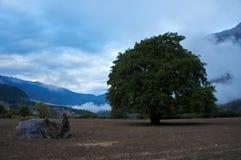 Сиротливое дерево Стоковое фото RF