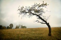 Сиротливое дерево Стоковые Фото