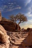 Сиротливое дерево na górze скалистой горы стоковая фотография rf