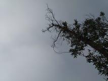 Сиротливое мертвое дерево стоковые изображения