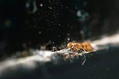 Сиротливое насекомое около ЖК-ТЕЛЕВИЗОРА Стоковое Изображение RF