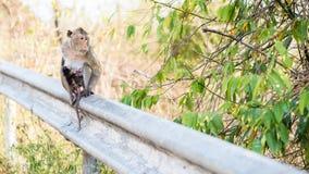 Сиротливое waitng обезьяны для друга Стоковое Фото
