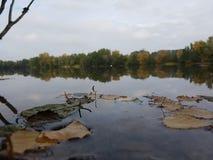 Сиротливые листья стоковая фотография