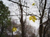 Сиротливые лист осени на мрачном дне Стоковое фото RF
