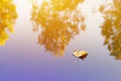 Сиротливые один лист осени на поверхности воды Стоковые Изображения RF