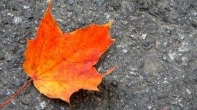 Сиротливые оранжевые лист осени на сером асфальте Стоковое фото RF