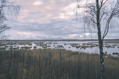 Сиротливые стволы дерева в лесе в лете - винтажном взгляде фильма Стоковая Фотография