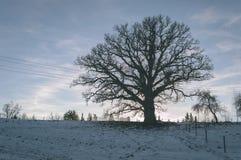 Сиротливые стволы дерева в лесе в лете - винтажном взгляде фильма Стоковое Изображение