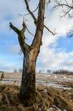 Сиротливые стволы дерева в лесе в лете Стоковое Изображение