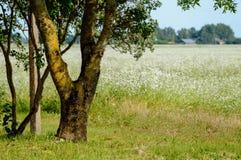 Сиротливые стволы дерева в лесе в лете Стоковые Изображения