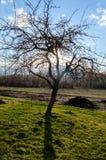 Сиротливые стволы дерева в лесе в лете Стоковое Изображение RF
