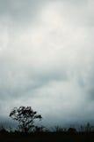 сиротливый вал Стоковая Фотография