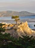 Сиротливый вал Cypress Стоковая Фотография
