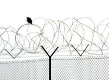 сиротливый ворон Стоковые Фото