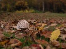сиротливый гриб Стоковое Изображение RF