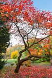 Сиротливый красивейший вал осени. Осень. стоковое изображение rf