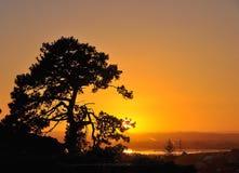 Сиротливый крупный план дерева на зоре стоковые фотографии rf