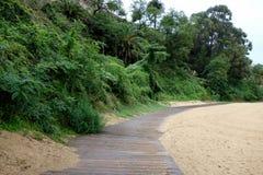 Сиротливый путь на пляже с вегетацией Стоковые Изображения RF