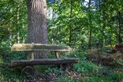 Сиротливый стенд в древесине Стоковое фото RF