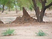 Сиротливый термит среди деревьев в Африке Стоковое Изображение RF