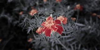 Сиротливый цветок в макросе стоковое фото rf