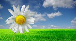 Сиротливый цветок Стоковая Фотография RF
