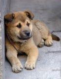сиротливый щенок стоковые изображения rf