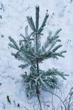 Сиротливый herringbone в лесе зимы Стоковые Фотографии RF