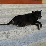 Сиротская собака Стоковое Фото